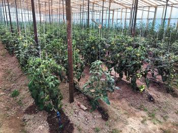 Кто будет выращивать урожай на приморской земле?