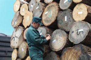 Маркировка экспортируемой древесины