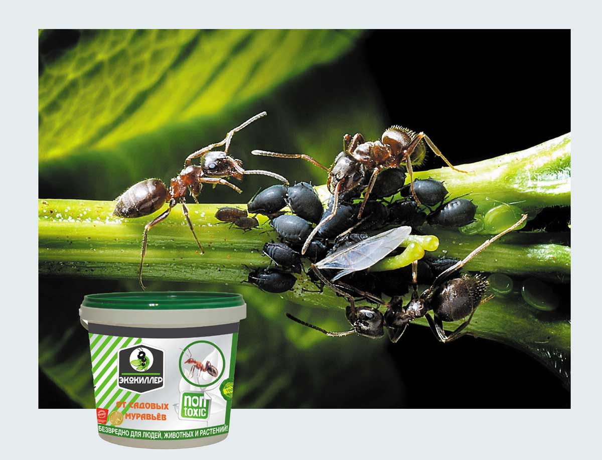«Экокиллер» и муравьи